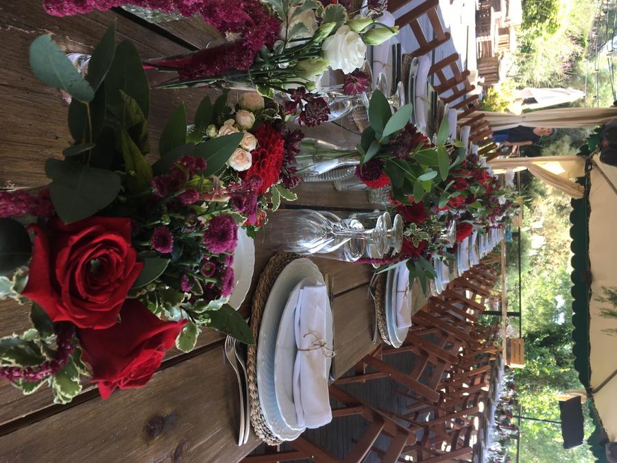 flors_plantes_bertran_bodes_26-min