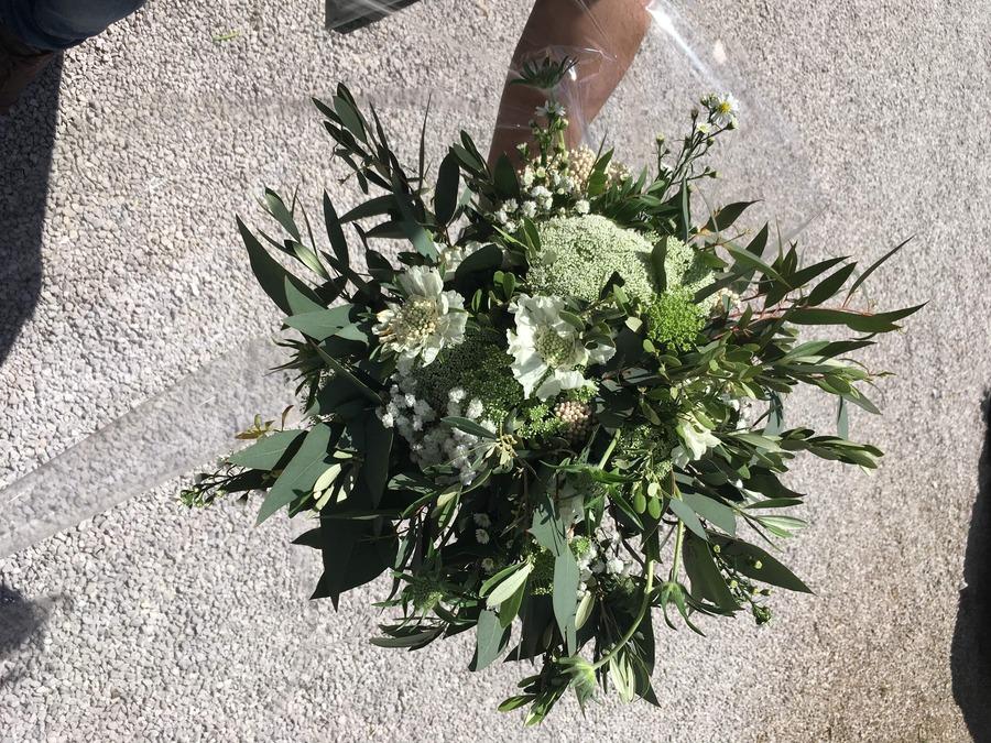 flors_plantes_bertran_bodes_5-min