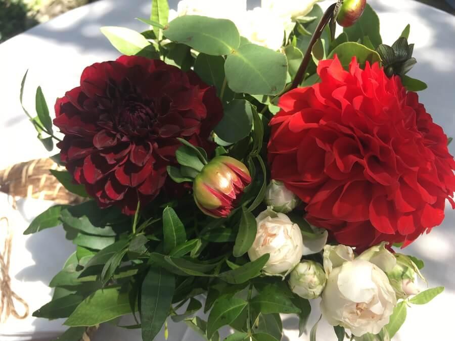 flors_plantes_bertran_particulars_11