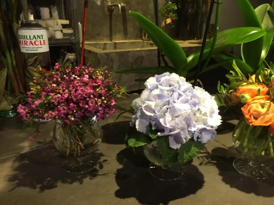 flors_plantes_bertran_particulars_14